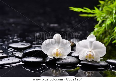 Still life with white orchid and bamboo leaf  ,black stones