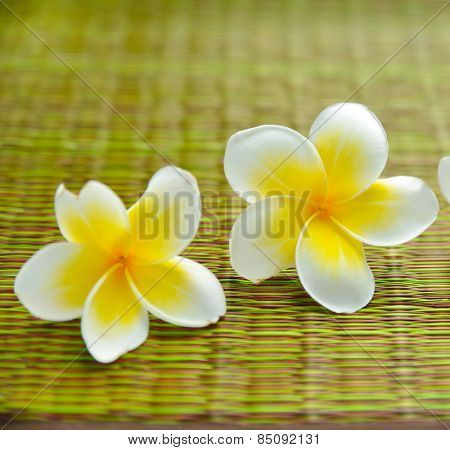 Two yellow and white frangipani flower on green mat