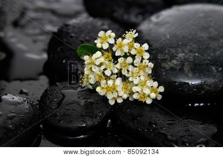 Tropical flower with wet stones on wet background
