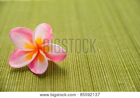 Pink frangipani flower on green mat