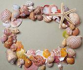 picture of beach shell art  - nice shells - JPG