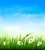pic of ladybug  - Spring background with sky - JPG