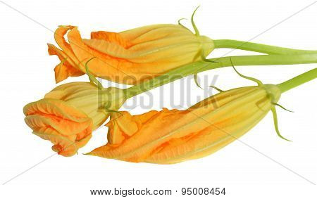 Yellow Courgette Blossoms
