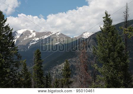 Snowcapped Rocky Mountains bordered by trees