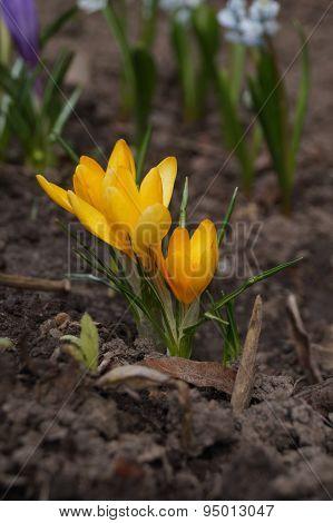 Yellow flower in soil