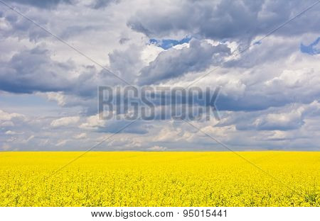Landscape with clouds and a rape field during flowering