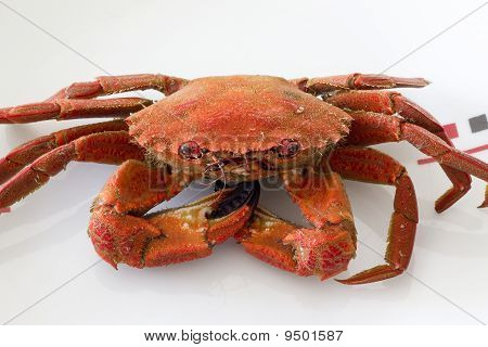Red crab plate 02