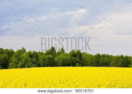 Landscape with clouds, trees and a rape field during flowering