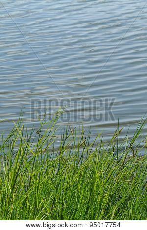 Green Nature Purity Grass On The River Bank