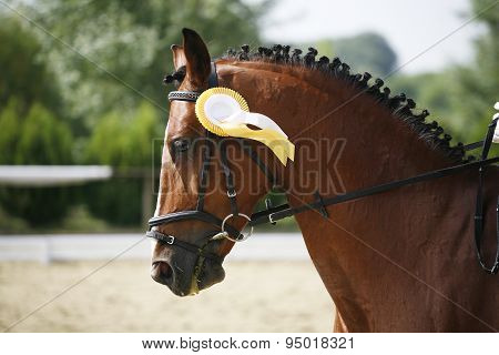 First Prize Rosette In A Dressage Horse's Head