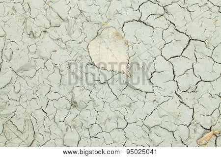 Dry Terrain Texture