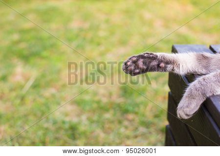 Cat's Claw Close Up Outdoors On Grass Background