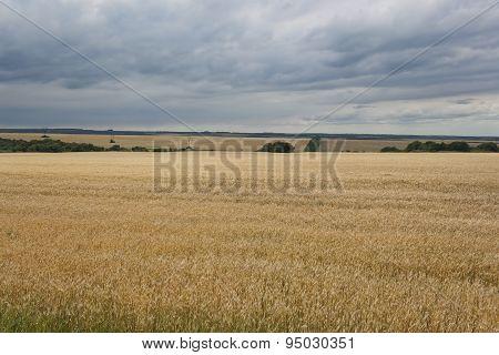 Fields Of Wheat, Rain Clouds