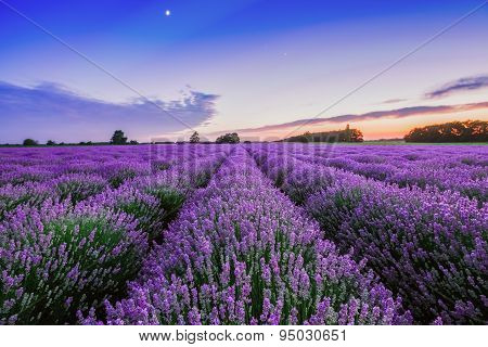 Sunrise And Dramatic Clouds Over Lavender Field