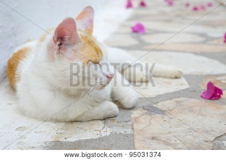 Cat Lying At The Floor With Pink Flower Petals