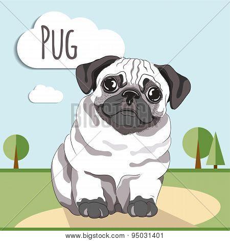 Pug puppy. Pug-dog on white background
