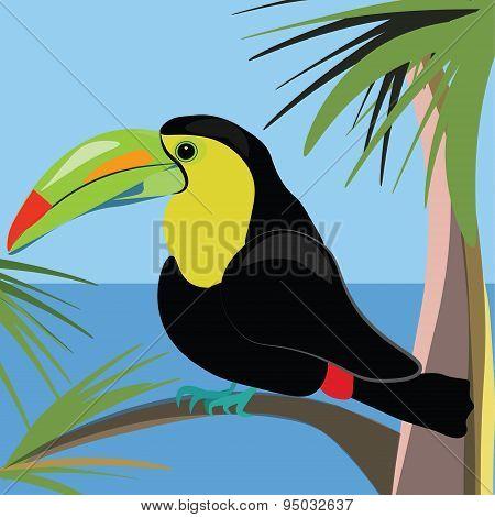 Beautiful toucan bird sitting on a palm tree