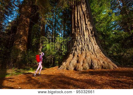 Woman with rucksack near tree, Redwood California