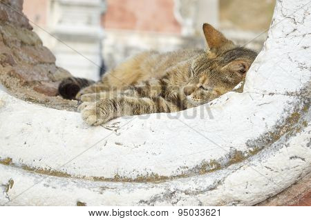 Cat Sleeping In A Rounded Window Opening