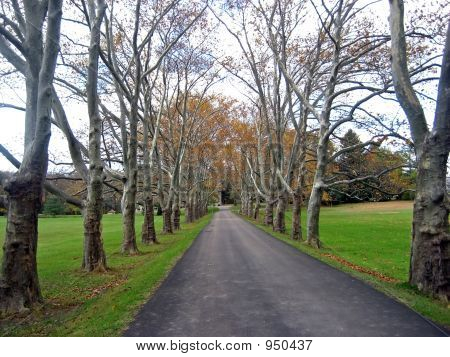 Grand Tree Lined Driveway