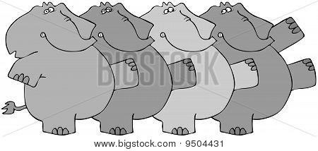 Elephant Chorus Line