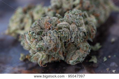 Medical Marijuana Close up Macro