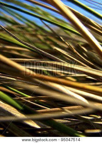 Multi-colored grasses