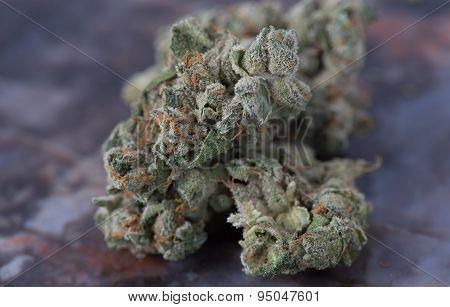 Medical Marijuana Macro
