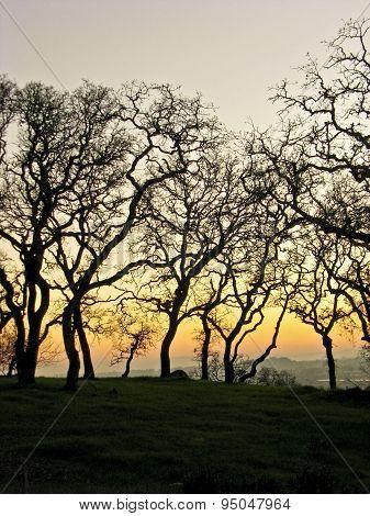 Grove in silhouette