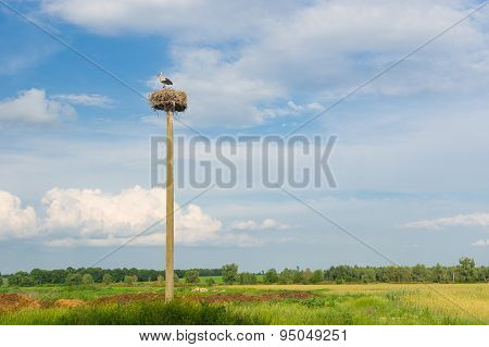Landscape with stork hermit nest against blue evening sky