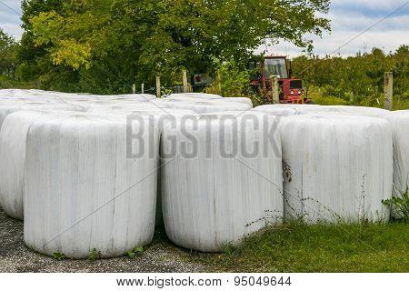 Hay Rolls In Farm