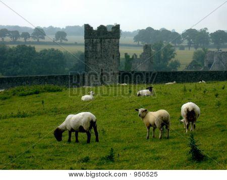 Sheepcastle