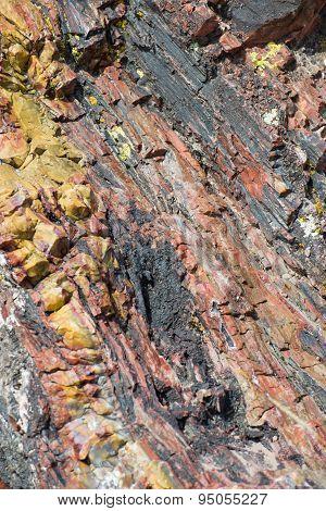 Petrified Forest Holbrook Arizona