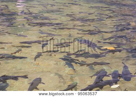 Fish in water.