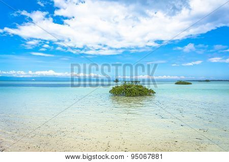 Green Bushes In Clear Water