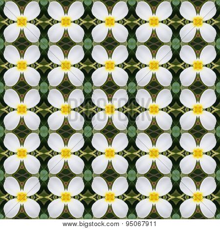 Frangipani Flowers, A Bouquet Of Flowers Seamless