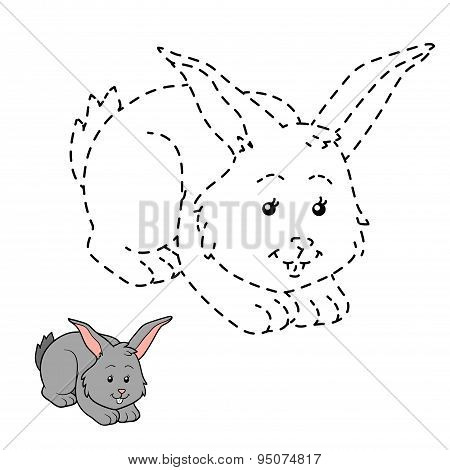 Connect The Dots (rabbit)