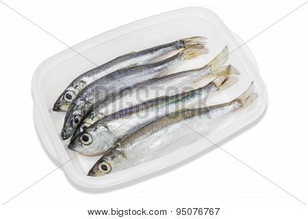 Several Sprats In Transparent Plastic Tray