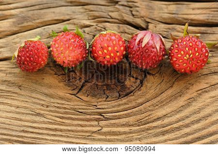 Five Wild Strawberries Fragaria Viridis In Row On Wooden Background