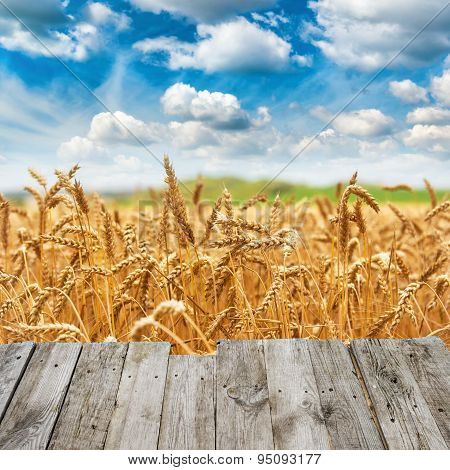 View From Wooden Bridge To Gold Wheat Field