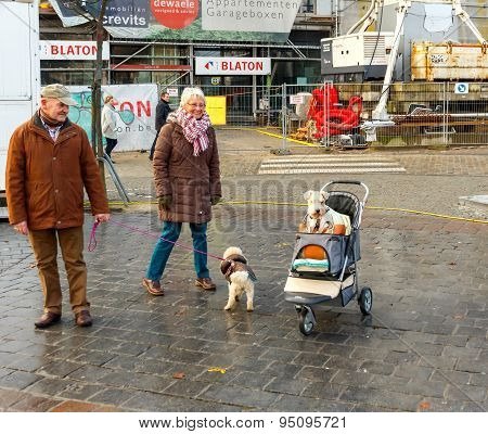 Gent. A Dog In A Baby Carriage.
