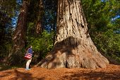 picture of redwood forest  - Man with US flag on shoulders stands near big tree in Redwood California during summer sunny day - JPG