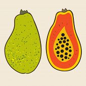 image of pawpaw  - Papaya vector Illustration - JPG