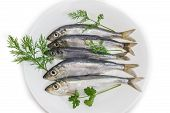 Постер, плакат: Several Sprats With Dill And Parsley On A Dish