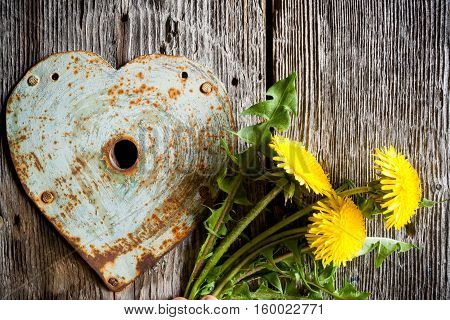 Keyhole - old rusty heart and yellow dandelions on old wood background.