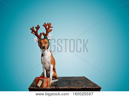 Cute dog dressed up as one of Santa's reindeer offers a present in craft cardboard box with red bow isolated on blue