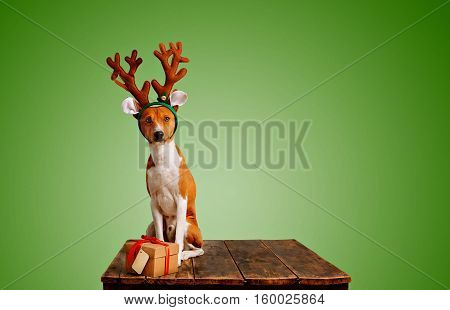 Pretty brown and white puppy dressed up as a reindeer sits next to a present in a box with red bow on leafy green background
