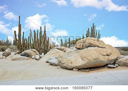 Rocks and Cactus plants in the cunucu on Aruba island in the Caribbean