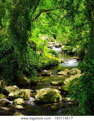 Natural Stream In Green Tropical Forest