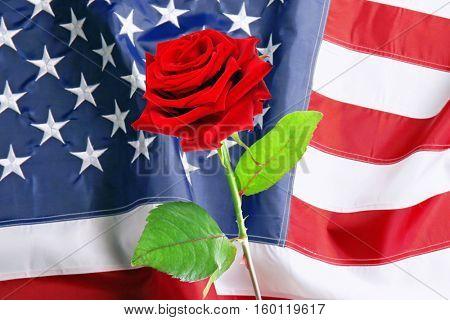 Rose on USA flag background. Symbol of America